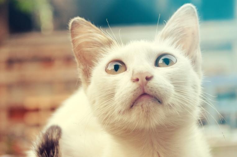 cat_hires